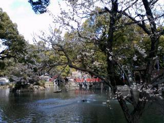 太宰府は春